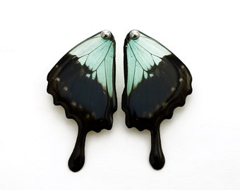 Real Papilio phorcas Hind Wing Earrings With Options