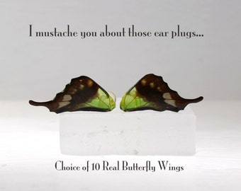 Real Butterfly Wing Ear Plugs - Gauges - Choice of 10 butterfly wings - Plug gauged to your choice of size