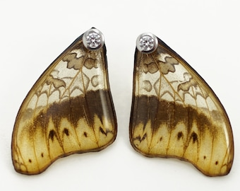 Real Cymothoe hermenia fore Wing Earrings With Options