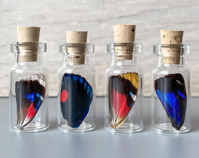 Real Butterfly Wing in Bottle XXS Specimen Jar ethically sourced Funds Conservation