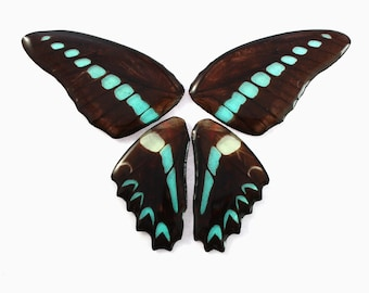 Real Butterfly Graphium sarpedon Full Necklace with Options