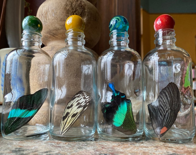 XXL Real Butterfly Wing in a Jar Funds Conservation