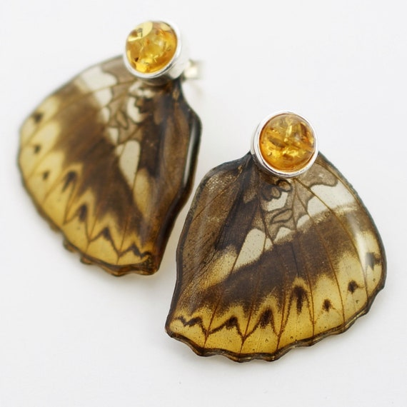 Real Cymothoe hermenia Hind Wing Earrings With Options