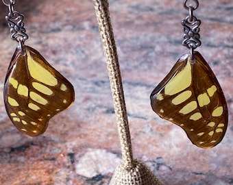 Real Butterfly Earrings (Graphium cyrnus) sterling silver ear hooks