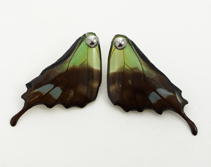 Real Graphium weiskei Hind Wing Earrings With Options