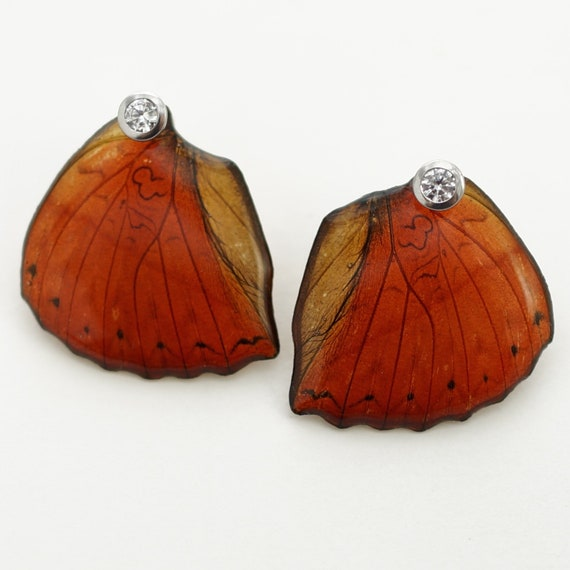 Real Cymothoe sangaris Hind Wing Earrings With Options