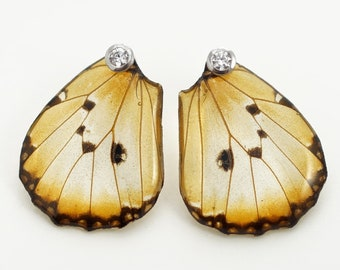 Real Danaus chrysippus Hind Wing Earrings With Options