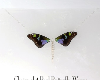 Sterling Silver Sunburst Real Butterfly Wing Necklace - Choice of 4 Butterfly Wings - Bow-tie Style with Chain Sunburst