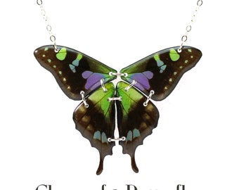 Sterling Silver Full Real Butterfly Wing Necklace - Choice of 2 Butterflies - 4 wings hung whole in natural form