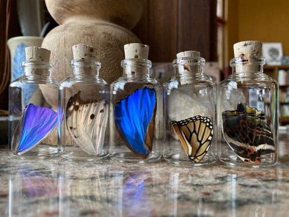 Medium Real Butterfly Wing in a Jar Funds Conservation