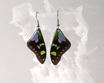 Real Butterfly Wing Earrings - Choice of 10 Butterflies - with hypoallergenic surgical steel french hook
