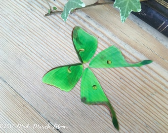Luna Moth craft wings, Faux Mini Luna Moth wing set for crafts, dolls wings, diy fairy wings, iridescent transparent moth wings