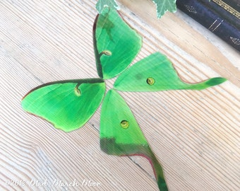 Luna Moth craft wings, Faux Large Luna Moth wing set for crafts, dolls wings, diy fairy wings, iridescent transparent moth wings