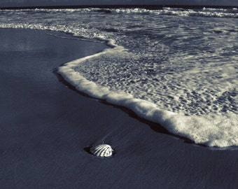 Venus at Night . Lonely shell on a wet sand, wave approching. Dark blue colours with exceptional lighting make this photo unique.