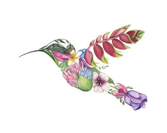 Hummingbird Drawing Etsy