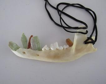 Coyote Jawbone Pendant Kyanite Teeth Necklace  Statement  Animal Bone Jewelry N1572