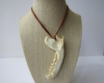 Raccoon Jaw Bone  Pendant Buckskin Leather Necklace Animal Bone Jewelry N291