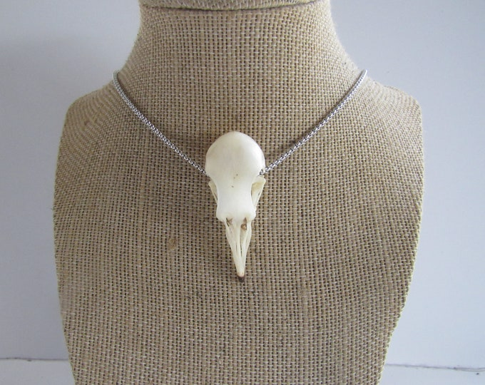 Pigeon Skull Necklace Bone Jewelry Tribal Unique Animal Bone Jewelry N1710