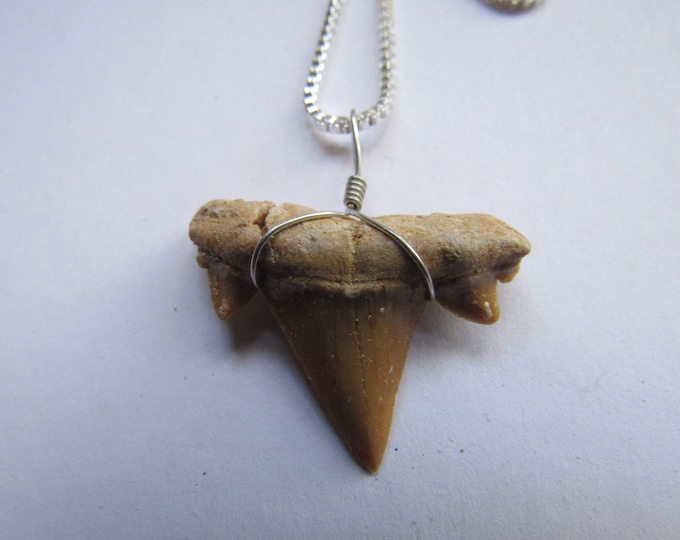 Shark Tooth Pendant Necklace Sterling Silver Dangle Fossil Bone Jewelry Otodus N482
