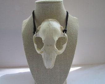 Beaver Skull Top  Pendant Leather Buckskin Necklace Animal Bone Jewelry N925