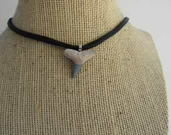 Grey Lemon Shark Tooth Pendant  Necklace Miocene Age  Fossilized Bone Jewelry  N769