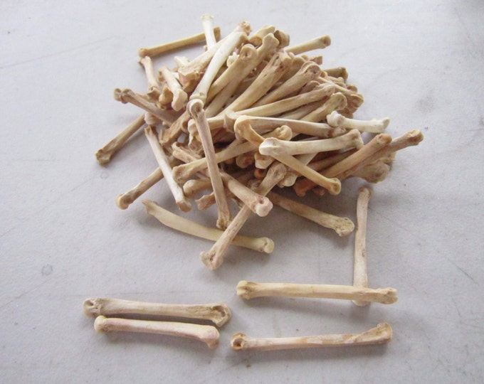 20 Coyote Foot Bones Metatarsals  Jewelry Supplies Craft  Projects Coyote Bones Hairpipe Beads Animal Bones