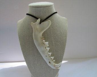 Coyote Jawbone  Pendant Buckskin Leather Necklace  Statement Necklace Animal Bone Jewelry N251