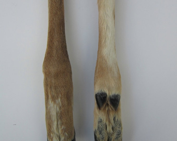 Cured Deer Leg Bone Taxidermy  Knife Handle  Native Craft Supplies