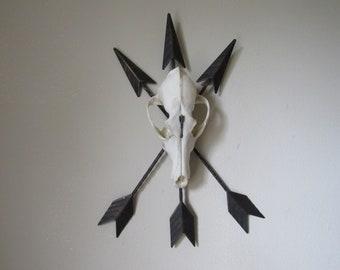 Metal Arrows & Coyote Skull  Wall Art Wall Decor Taxidermy Animal Art Curiosities Bone Art Southwestern Art