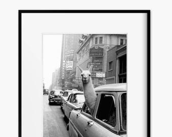 Retro photo of Llama in New York Taxi from 1950s - Eclectic Home Decor - Llama in a Taxi Art Print - Llama Art - Black + White Iconic Image