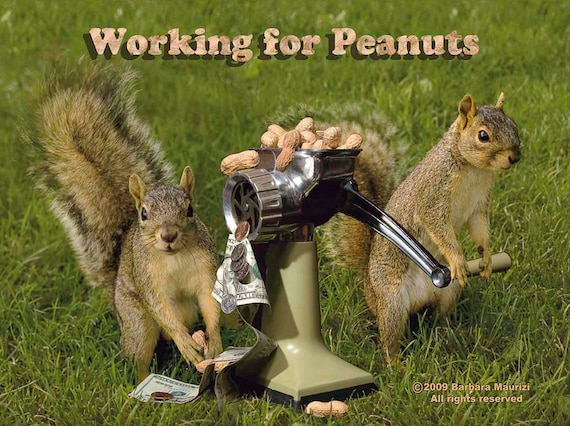 4 Funny squirrel postcards. squirrels Working for   Etsy