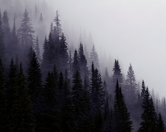 Nature Photography, Mountain Photography, Trees in Mist, Fine Art Photography, Mountain Photos, Canadian Rockies, Black and White Photo