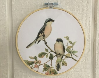 Bird wall art Hoop Art vintage illustration BIRDS cottage farmhouse decor shabby chic