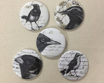 """Vintage Bird Magnets Refrigerator Magnets Set of 5 Size 2.25"""" inches"""