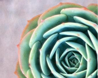 Nature Photography- Succulent Photograph- 8 x 10 Matted Metallic Print