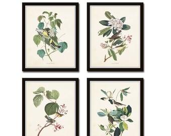 Audubon Bird Prints Set No. 16, Botanical Prints, Illustration, Prints, Vintage Bird Prints, Giclee, Wall Art, Vintage Bird Prints, Collage