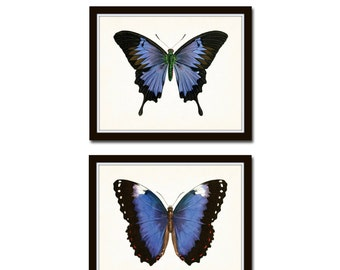 Vintage Blue Violet Butterfly Print Set No. 5, Butterfly Print, Butterflies, Art Print, Giclee, Art, Print Set, Butterfly Prints, Insect Art