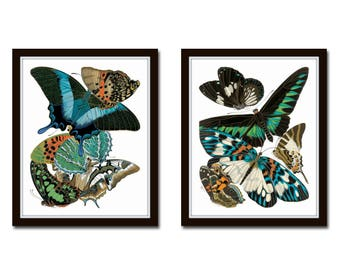Art Nouveau Butterfly Print Set No. 30, Butterfly Prints, Scientific Illustration, Wall Art, Prints, Giclee, Print Set, Insect Art