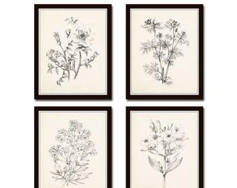 Vintage Botanical Sketch Prints Set No. 2, Botanical Prints, Giclee, Art Print, Vintage  Botanicals, Illustration, Flower Prints, Flower Art