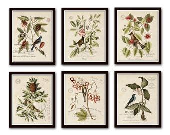 d0b228e98753 Vintage Bird and Botanical Print Set No.2