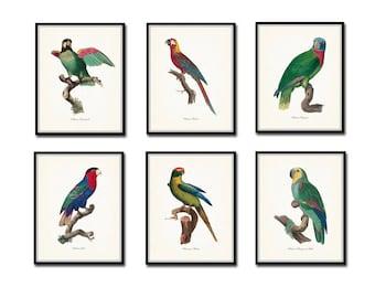 Vintage French Parrot Print Set, Giclee, Art Print, Bird Prints, Beach Cottage Decor, Print Set, Wall Art, Scientific Illustration