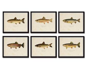 Vintage Trout Print Set No. 2, Natural History Art, Giclee, Art, Print Set, Woodland Art, Fish Print, Trout, Fly Fishing Art, Angler Art