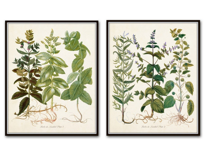 Giclee Herb Print Botanical Print Art Print Herbier Antique Botanical Wall Art Herbs de Menthol Print Set Kitchen Art Illustration