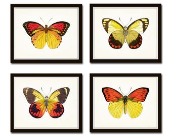 Vintage Yellow Butterfly Print Set, Butterfly Print, Butterflies, Art Print, Giclee, Art, Print Set, Butterfly Prints, Insect Art, Wall Art