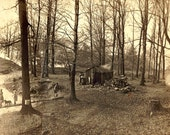 1910 Sepia Photograph of Sugar Bush Maple Trees and Boiling Shed