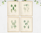 Vintage Herb Prints, Herb Wall Art, Kitchen Herb Printable, Botanical illustrations, Kitchen Wall Art, Kitchen Prints, Vintage Kitchen Decor