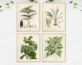 4 Vintage Botanical Prints, Herb Art Prints, Botanical Wall Art, Vintage Prints, Botanical illustration, Printable Wall Art, Greenery Print