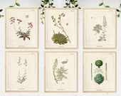 6 Succulent wall art, Succulent Prints, Vintage Botanical Prints, Herb Art Print, Botanical Wall Art, Botanical illustration, Greenery Print