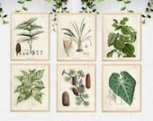 Set of 6 Vintage Tropical Prints, Tropical Greenery Art, Vintage Botanical Poster, Vintage Botanical illustration, Greenery Print