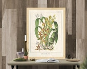 Vintage Botanical Prints, Herb Art Prints, Botanical Wall Art, Vintage Prints, Botanical illustration, Printable Wall Art, Greenery Print